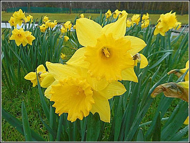 Springtime on Camera ..