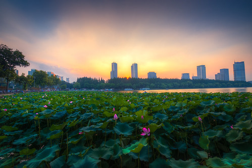 sunset lotus city building architecture summer twilight dark dusk flower plant sun outdoor lake water petal waterlily green blue nikon d800 nikond800 tamronsp1530f28