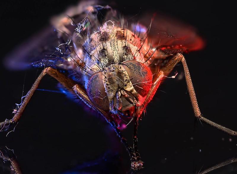 Adaptalux Fly.