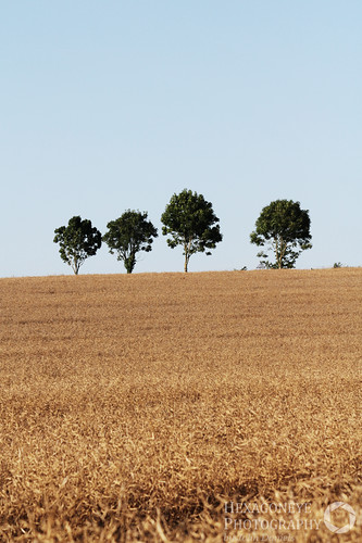 4 Trees in a Field | by Hexagoneye Photography