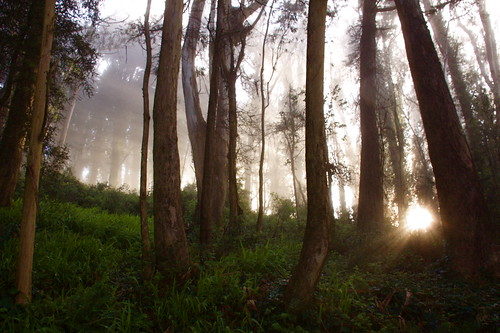 sanfrancisco ca trees nature fog forest sunrise landscape woods pathway mountdavidson