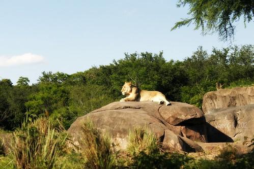 Sunbathing   by VaneGill