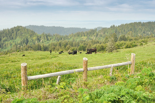 Pastureland in the northern Lost Coast | by tomsbiketrip.com