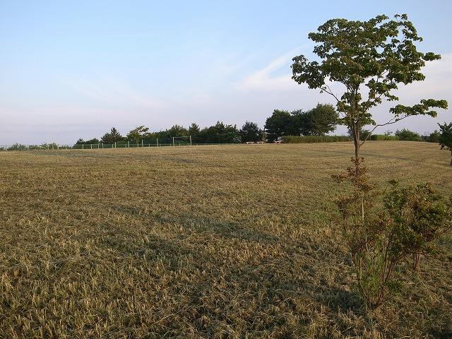 <p>a)雑草が刈られて走りやすくなったフィールド。ここではフレッシュな草の香りがいっぱいです。</p>