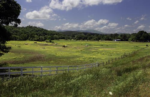 Ozark Horse Pasture