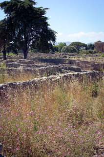 Italy, Paestum | by Morning by Foley