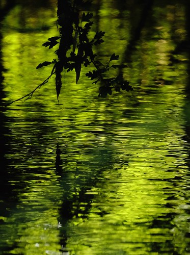 Reflections of Green | by d_salter