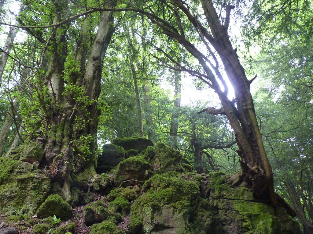 Bracelands Forest of Dean 035