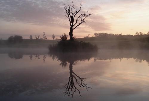 sunlight mist 2012 sillouettes