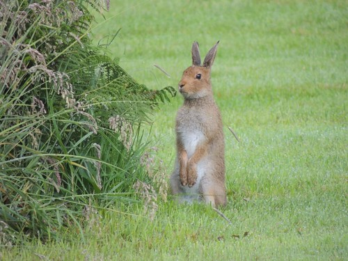 county ireland holiday garden hare clare view cottage mayo aillemore