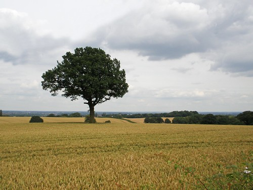 Corley Landscape | by amandabhslater