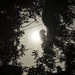 2012 - 05 Annular Eclipse