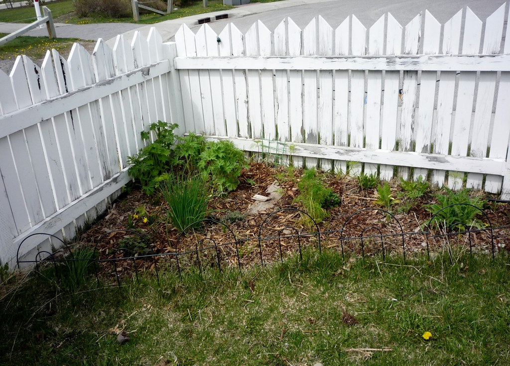 Front Corner Flower Bed Starting To Look Great Love Compa Flickr
