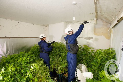 Day 125 - West Midlands Police - Cannabis Disposal Team - Drugs Warrant | by West Midlands Police