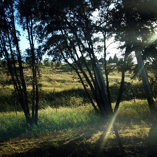 #mymayphotoaday day 14: light: Sonoma County. | by sarahwulfeck