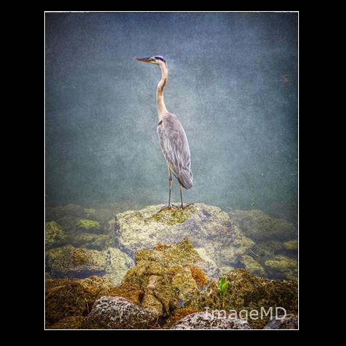 Heron Shoals