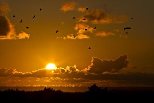 ocean sunset kite beach evening dusk flock paraglider