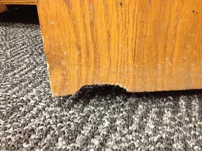 Rat gnawing damage on wooden door