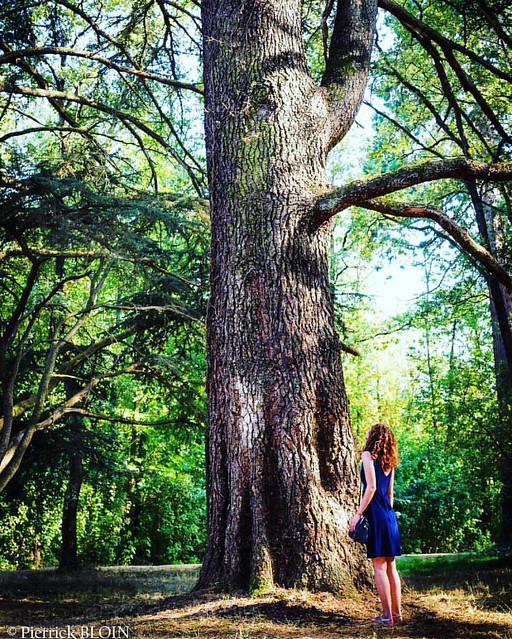 Alice continues her journey ...🏰❤️#castle #loire #trip #france #travel #loirevalley #photo #photogram #photography #photographer #photooftheday #picooftheday #instadaily #instagram #photogram#ilovefrance