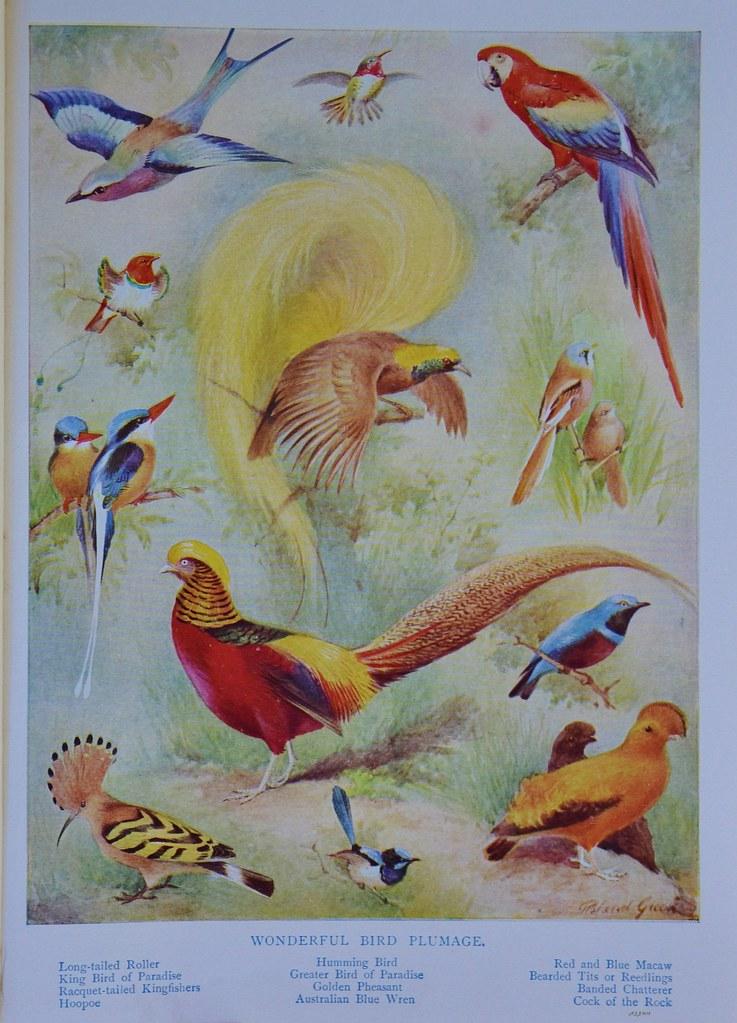 The Golden Bird (Blue and Green Wonders)