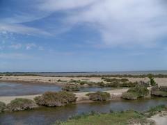 Camargue - rives de Vaccarès