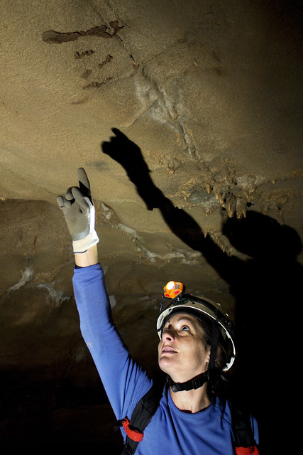 Bat stain, Baker Cave, Kristen Bobo, Cumberland Co, TN