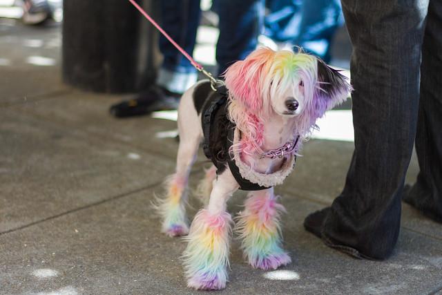 San Francisco Pride 2012: style profile