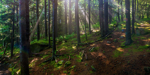 sunlight forest moss woods spooky ferns sunbeams firs appalachiantrail primordial carversgap roundbald primordialforest