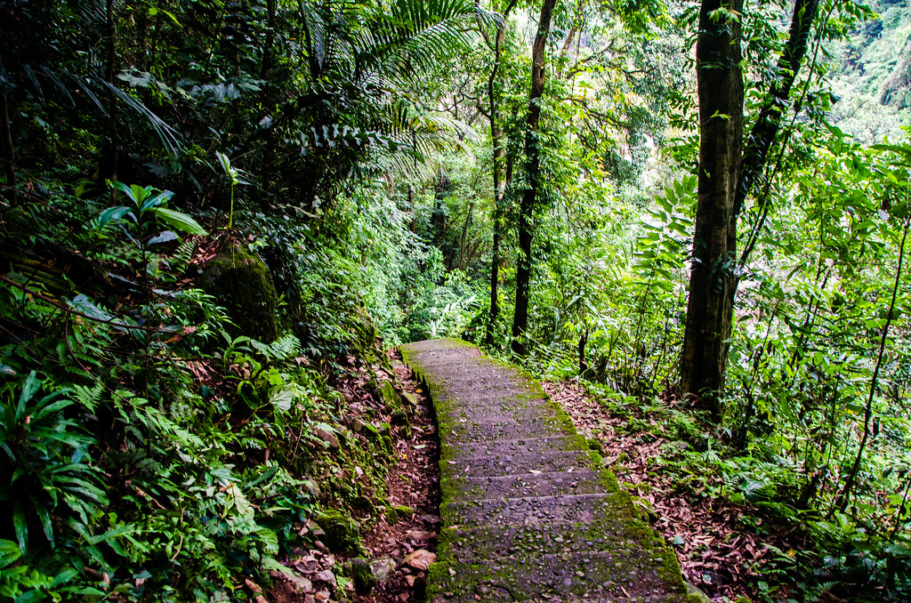 Cherrapunjee Rain Forests, one of the best places to visit in Meghalaya