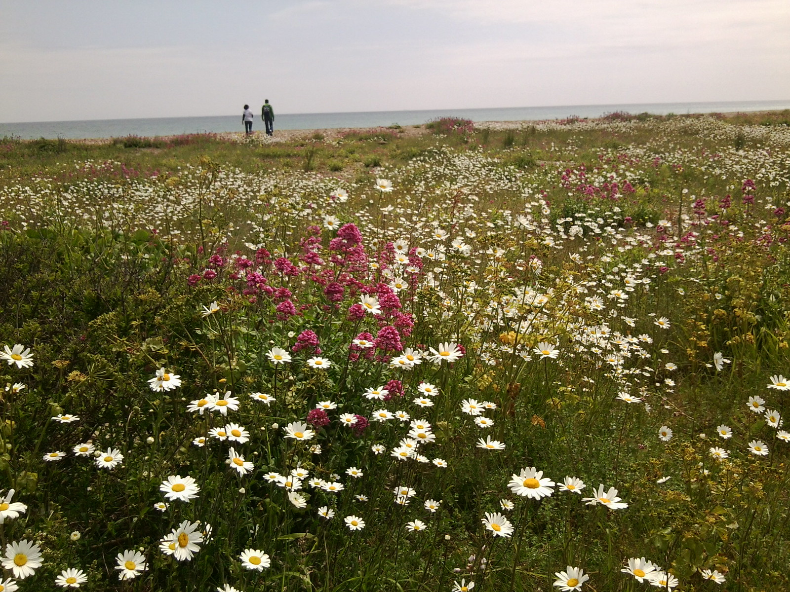 Flowers, Deal Beach Deal to Dover