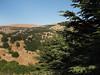 Al-Shouf Cedar Nature Reserve / Barouk Cedar Forest, foto: Milena Šumanová