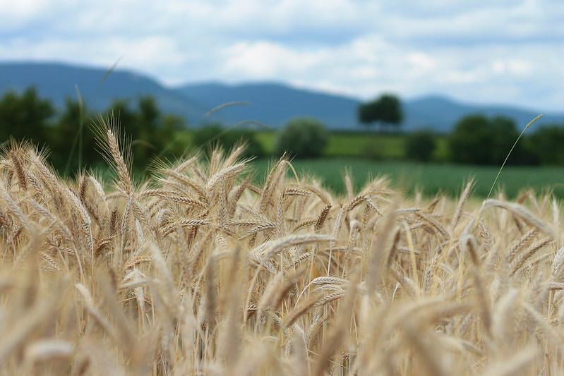Landscape Grain