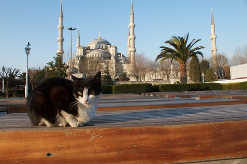 Blue Mosque with stray cat   by brian.gratwicke