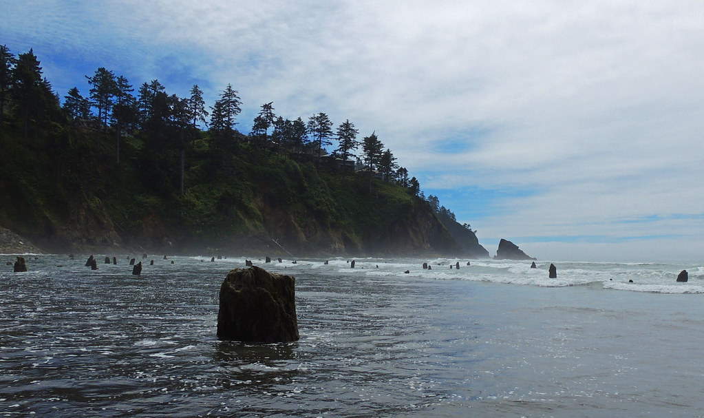 The Neskowin Ghost Forest