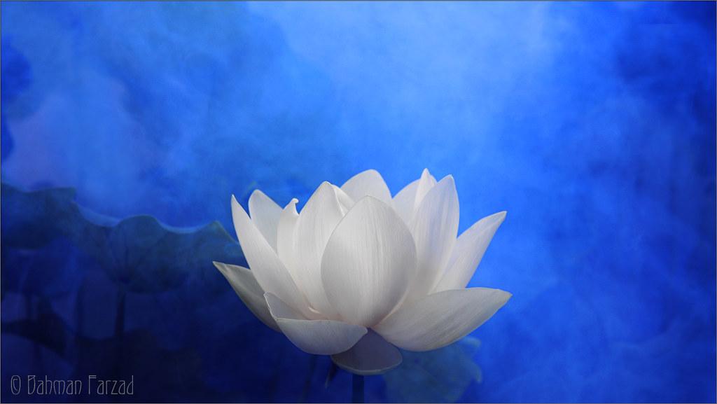 White Lotus Flower Surreal Series Dd0a7194 2 1000 Lotus Flickr