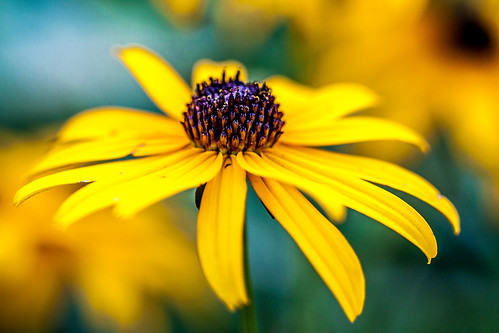 summer flower color macro yellow closeup michigan mason lansing