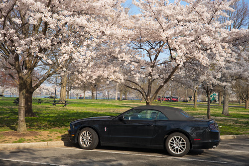 Mustang and Blossoms | by Bsivad