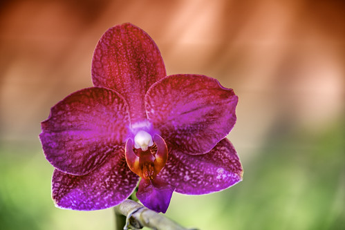 Lonely Orchid | by Charles Patrick Ewing