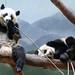 Ya Lun and Xi Lun by smileybears