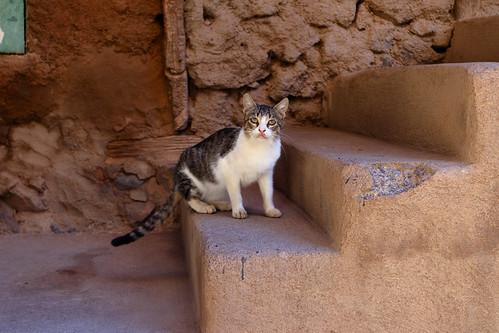 IMG_0901 Morocco 2016   by Noodlefish