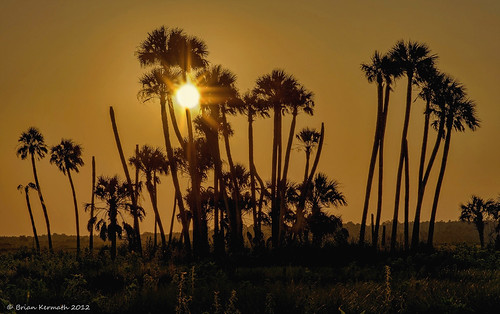 flare solarflare sun sunset lakewoodruff sky skies tree trees palms palmtrees cabbagepalms sabalpalmetto sunflare