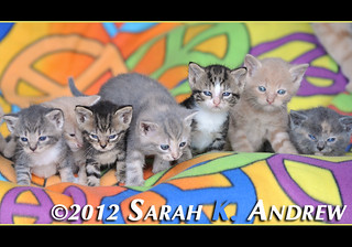 Please call Camelot Auction at 609 448 5225 for more information about the kittens at the barn who are looking for homes. | by Rock and Racehorses