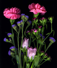 Carnation Arrangement