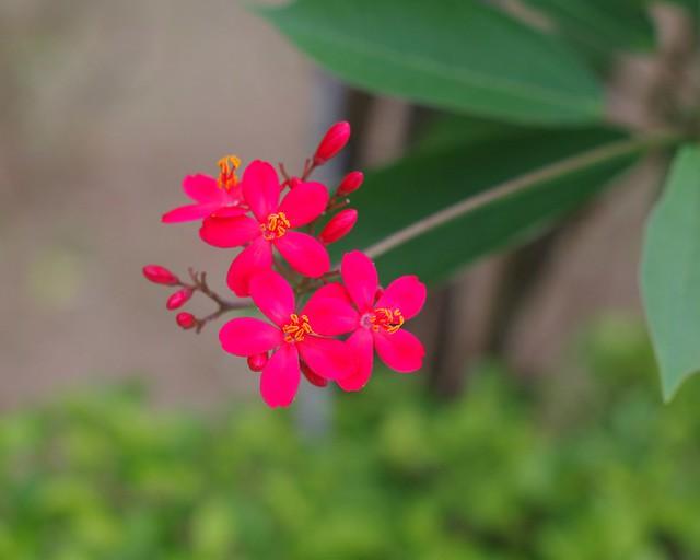 flower- shot use pentax km with Yashica Auto Yashinon-DX 50mm1.7 m42Copy of _IGP9614