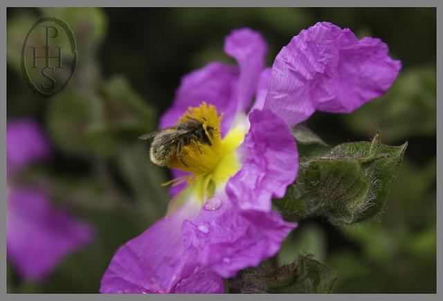 Summer Sunday at The Royal Botanic Garden Edinburgh (105)