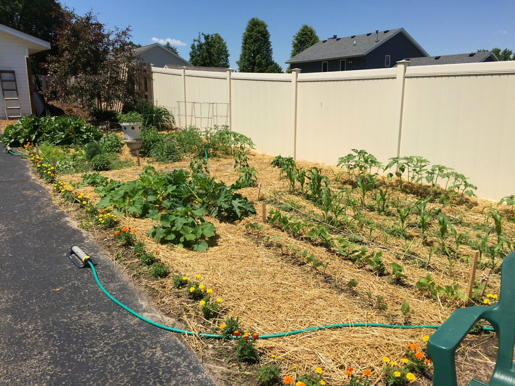larger vegetable garden