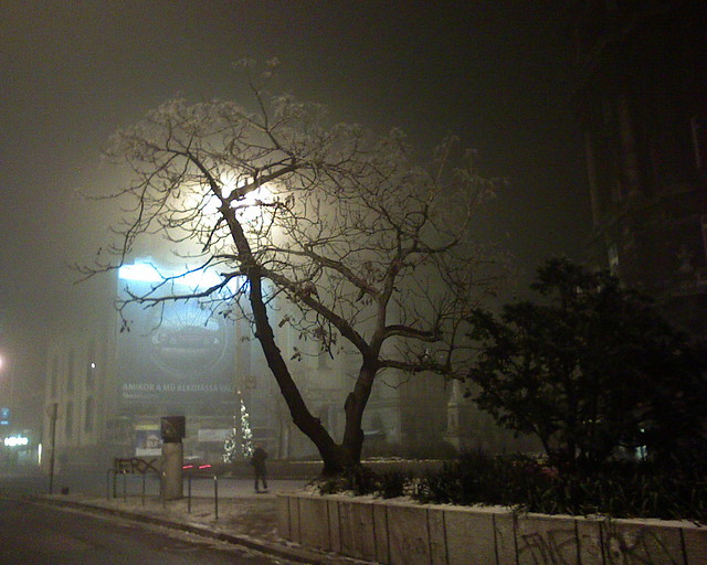 My Favourite Tree of Ferenciek tere (Sq.) by Night  in Pest, Budapest
