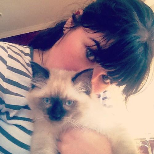 kittens make it all better.   by sarahwulfeck