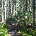Kinsman Ridge Trail