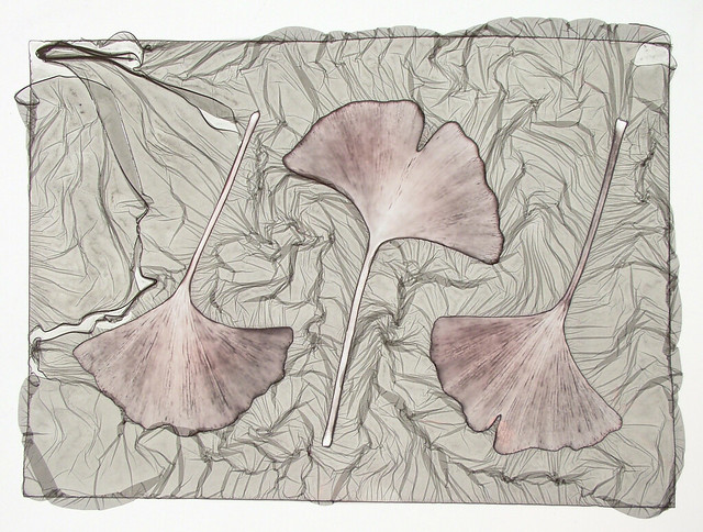 Mordancage Ginkgo Leaves by John Fobes